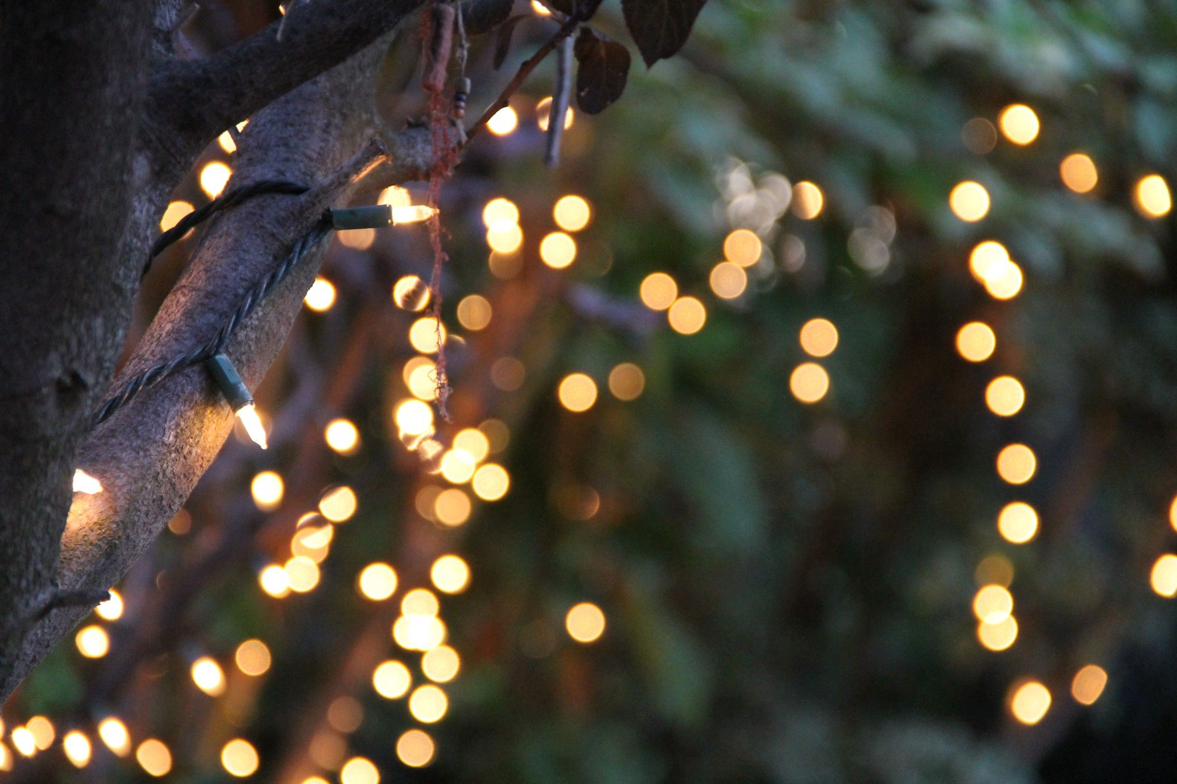 String Lights Bokeh Tree